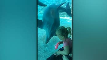 3-year old Florida girl made friends with SeaWorld dolphins