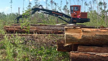 Hurricane Michael recovery: Future of timber farming