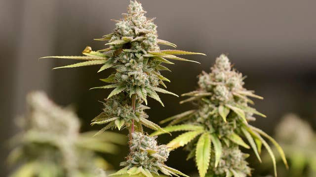 New York state lawmakers introduce bill to decriminalize marijuana