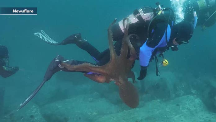 Terrifying video shows diver fighting off giant octopus