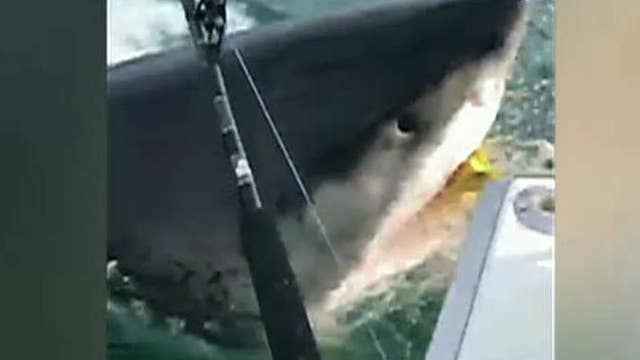 What you need to know to protect yourself from shark encounters