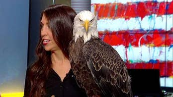 America's most famous bald eagle celebrates National American Eagle Day on 'Fox & Friends'