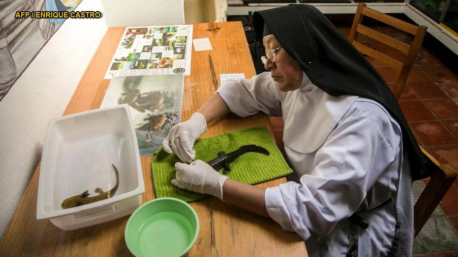 Mexican nuns work with biologists to save endangered salamander