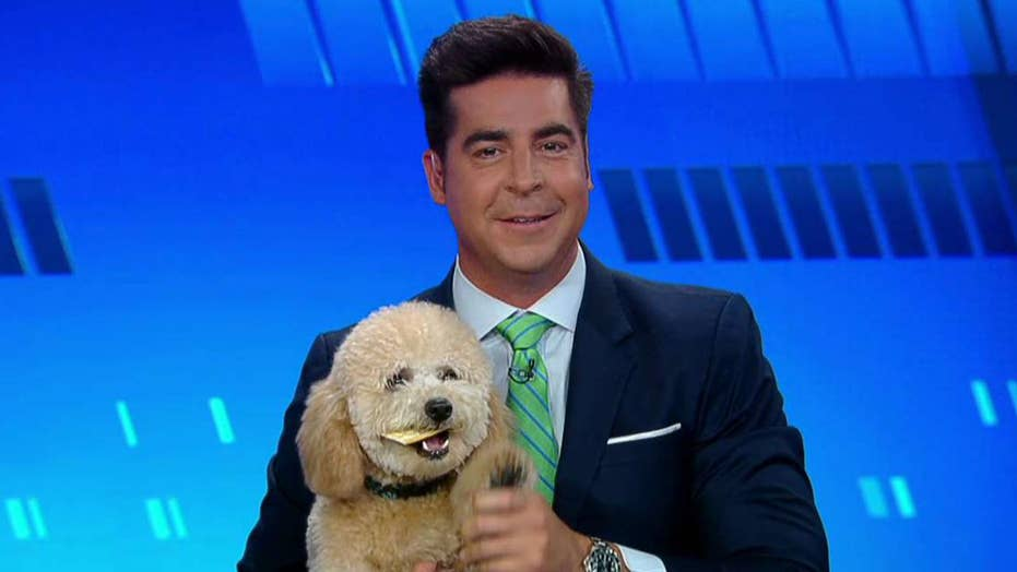 'The Five' celebrates National Bring Your Dog to Work Day
