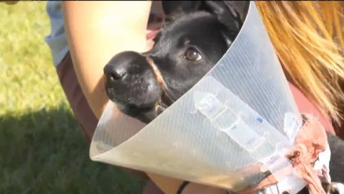 Woman accused of binding pup's mouth to keep her quiet faces felony charge