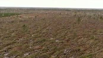 Three million acres of Florida timber rotting away eight months after Hurricane Michael