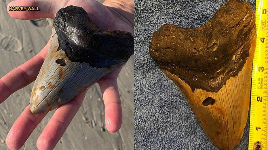 North Carolina man finds megalodon shark tooth buried on beach
