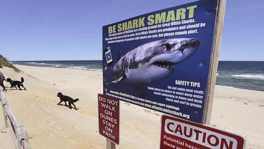 Bahamian tourism officials working to 'mitigate' risks following fatal shark attack