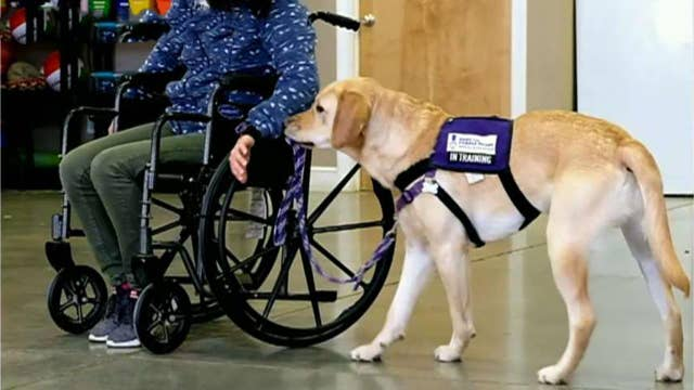 How 'Paws for Purple Hearts' supports US veterans