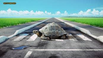 Jetstar flight delayed by turtle slowly crossing tarmac