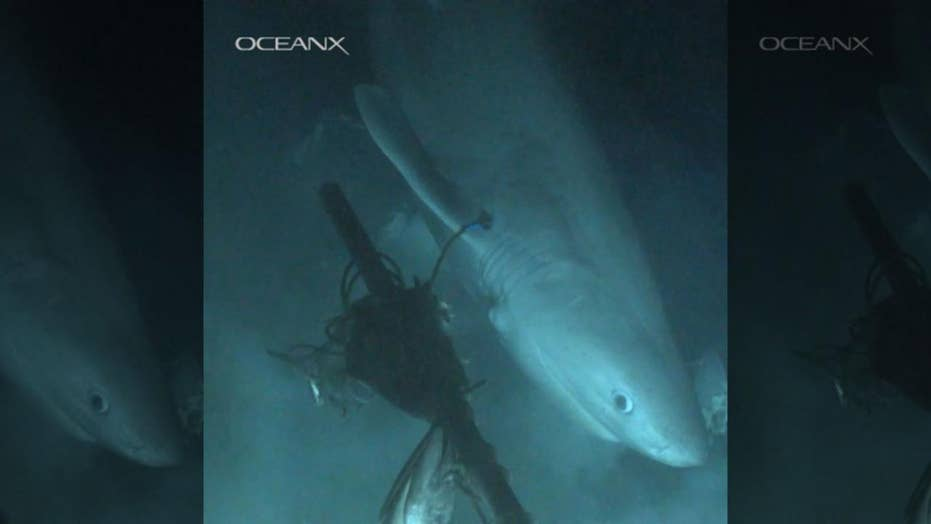 Mysterious deep-sea shark that's older than the dinosaurs captured on film