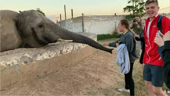 Watch: Elephant slaps girl in the face