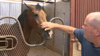 Funds dry up for equine therapy program that helps first responders suffering from PTSD