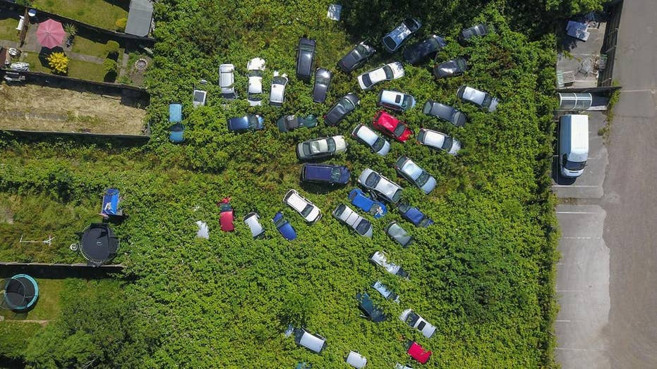 Mysterious car graveyard growing behind homes in suburban lot
