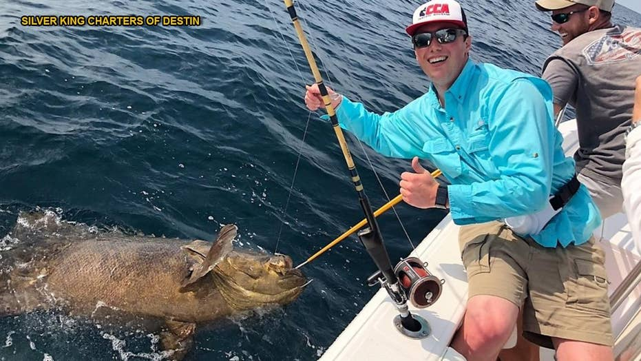 Fishermen locate goliath grouper weighing 350 pounds