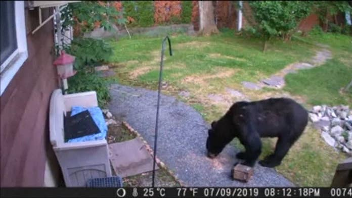 Courageous dog chases bear from New Jersey backyard in wild video