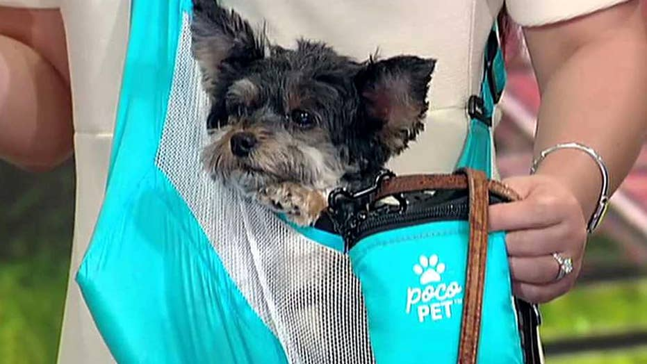Tips and gadgets every pet owner needs to beat the dog days of summer