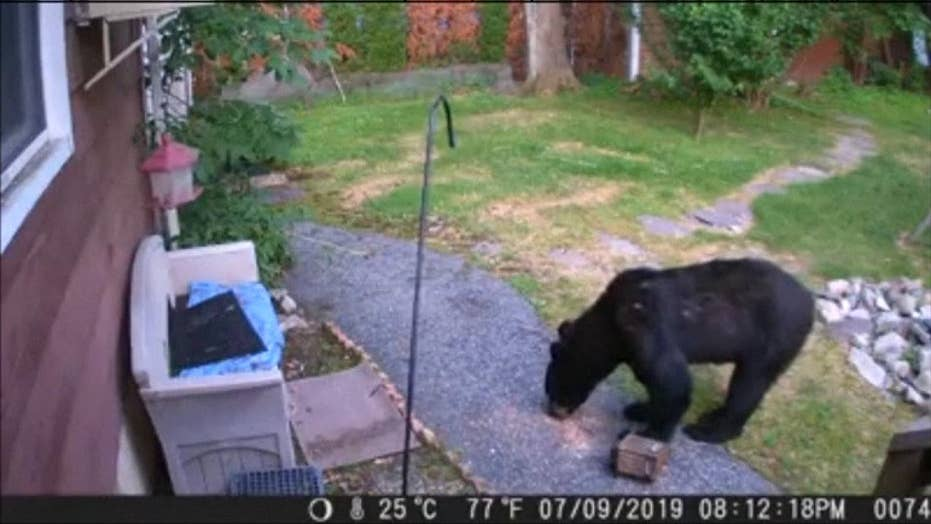 RAW VIDEO: Dog chases bear from garden