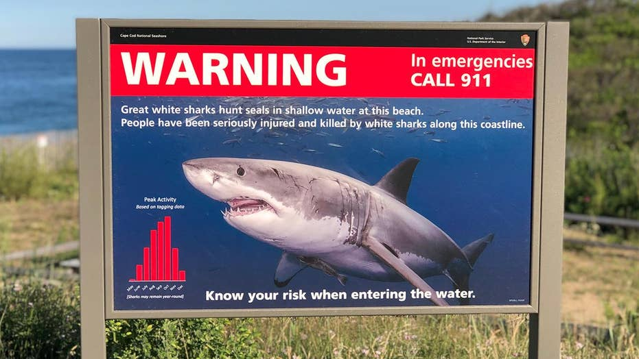 Spike in shark sightings off Cape Cod alarms swimmers, keeps them tighten to shore