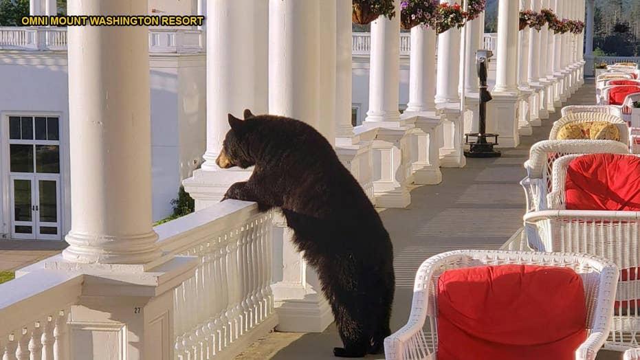 Black bear photographed enjoying sunrise at New Hampshire hotel