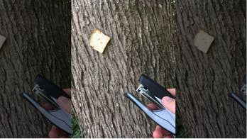 Popular trend of photographing stapled bread gains buzz in UK