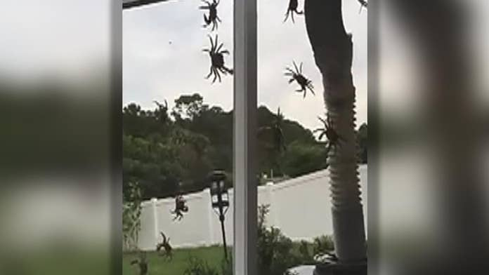 'Invasion' of land crabs at Florida home caught on video