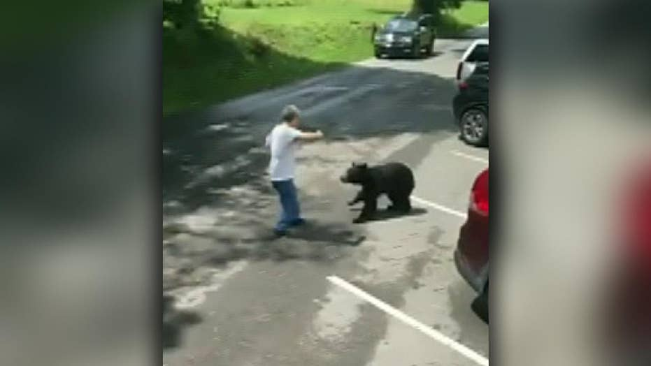Raw video: Mother bear charges at man who got too close to her cubs