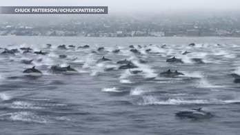Dolphin 鈥榤ega pod鈥� off California coast stuns onlookers, video shows