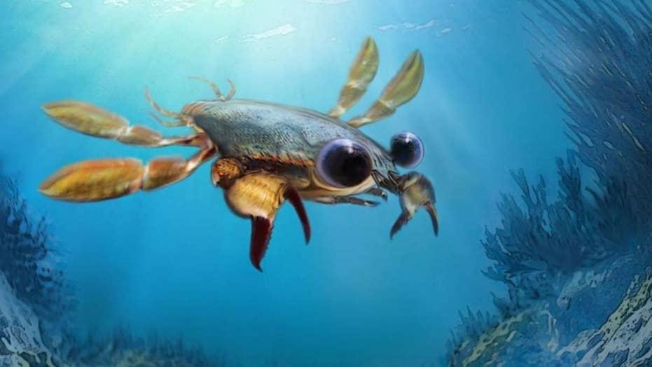 Scientists discover bizarre 'nightmare' crab with cartoon eyes