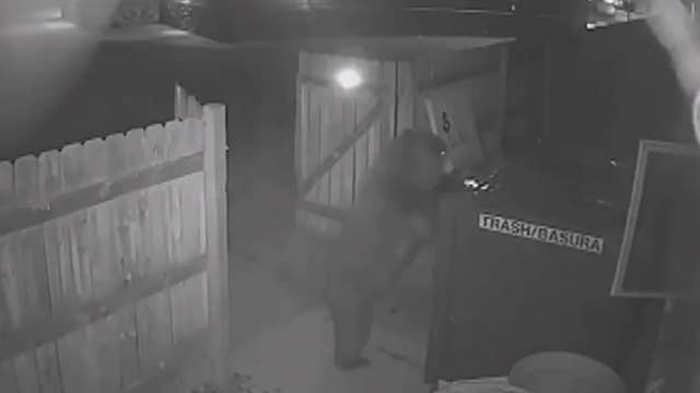 Bear breaks through wooden fence, steals dumpster