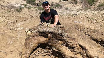 College student finds 65-million-year-old fossil of Triceratops skull in North Dakota badlands