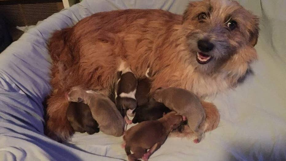 Couple seeks homes for foster puppies named after Taco Bell menu items