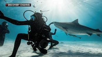 Return of 'Shark Week' brings renewed fascination with the apex predators