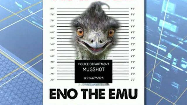 Authorities search for emu on the loose in North Carolina