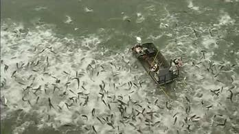 Fish and wildlife officials in Kentucky stun huge school of invasive Asian carp