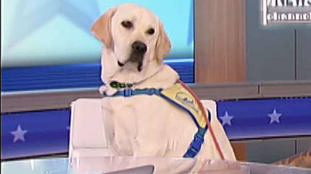 Spike to attend doggy college at Canine Companions for Independence