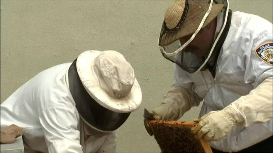 NYPD officers fighting to save honeybees