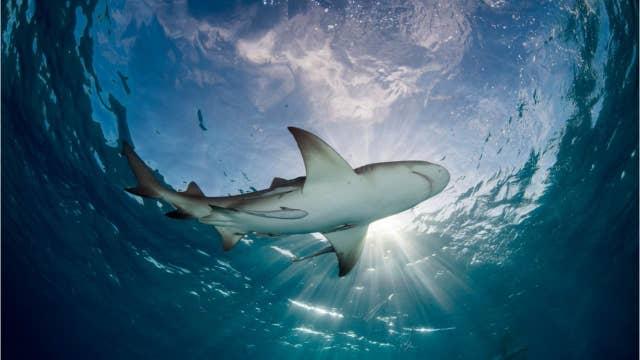 Reports: Sharks attack 2 surfers minutes apart at Florida beach