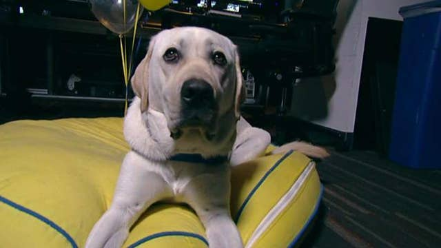 'The Daily Briefing' says goodbye to Spike as he heads off to doggie college