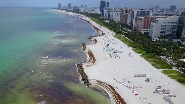 Florida beaches covered in rotting seaweed as unprecedented amounts wash onshore