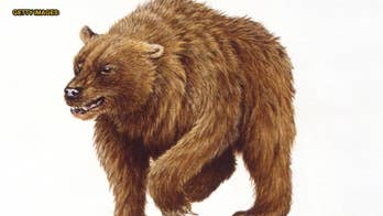 Human hunters may have played large role in driving cave bear to extinction, study says