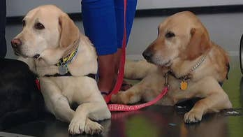 Service dogs watch''Fox & Friends!'