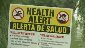 Environmental officials issue warning after toxic algae is found in New York City parks