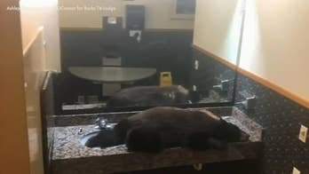 Black bear gets stuck in hotel's women's bathroom
