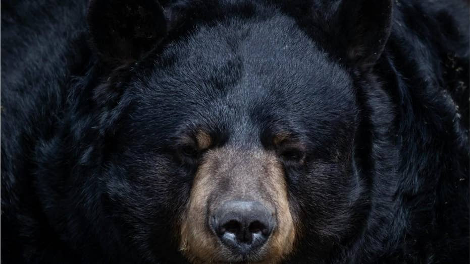 Canadian man says he pleaded with black bear during attack: 'You don't have to do this'