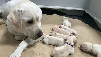 Puppy born at Canine Companions facility named after Tyrus