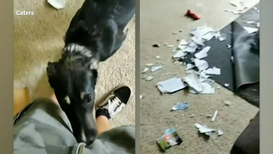 Dog caught destroying book about dog training