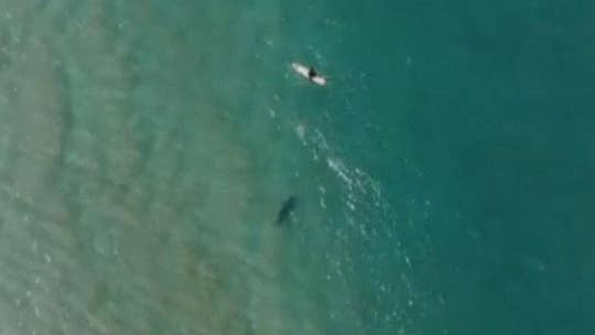 Shark circles oblivious Australian surfer in drone footage