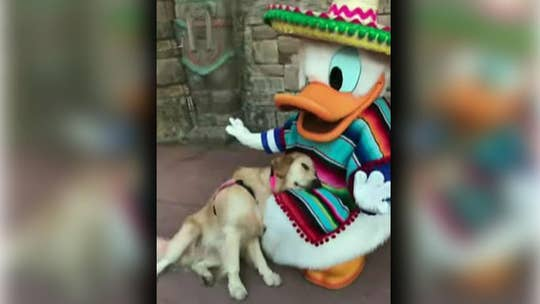 Disney World service dog lounges with Donald Duck