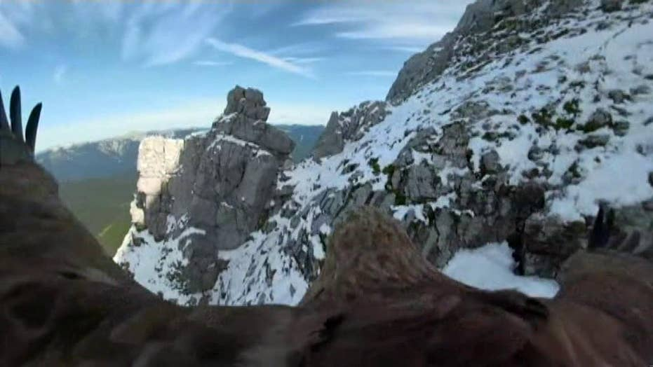 Raw video: Camera attached to an eagle shows the reduction of Europe's glaciers